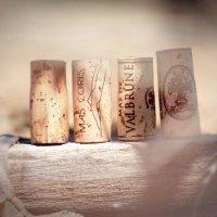 vins vignes et terroirs cabrieres