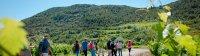 cabrieres balade vins vignes et terroirs