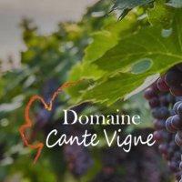 cante vigne