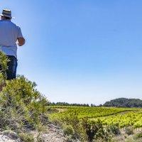 paysage du vignoble du picpoul de pinet une aoc en terroir languedoc