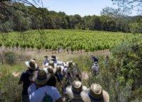 vins vignes et terroirs aoc picpoul de pinet