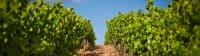 Languedoc et vignobles vignette