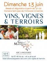 vins vignes et terroirs gres de montpellier