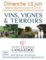 vins vignes et terroirs aoc saint saturnin