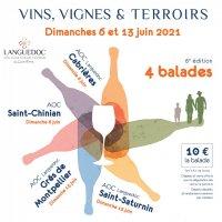 vins vignes et terroirs